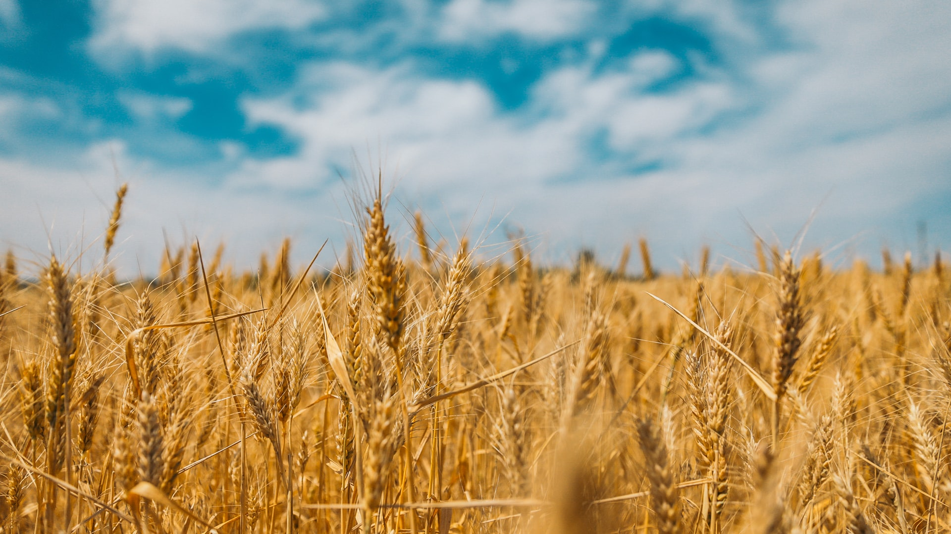 Big Data аналітики удвічі підвищили точність прогнозів врожайності